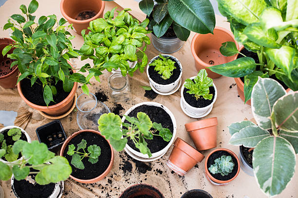 balcony garden Natural plants in pots, green garden on a balcony. Urban gardening, home planting. potting stock pictures, royalty-free photos & images