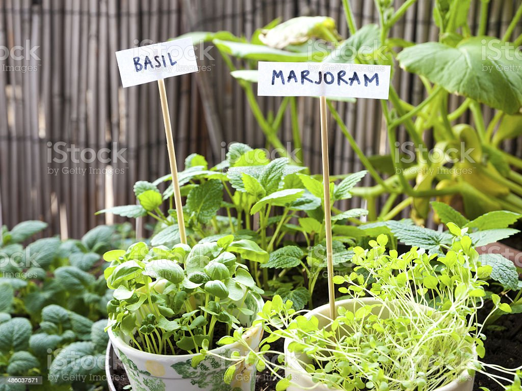 Balcony herb garden stock photo