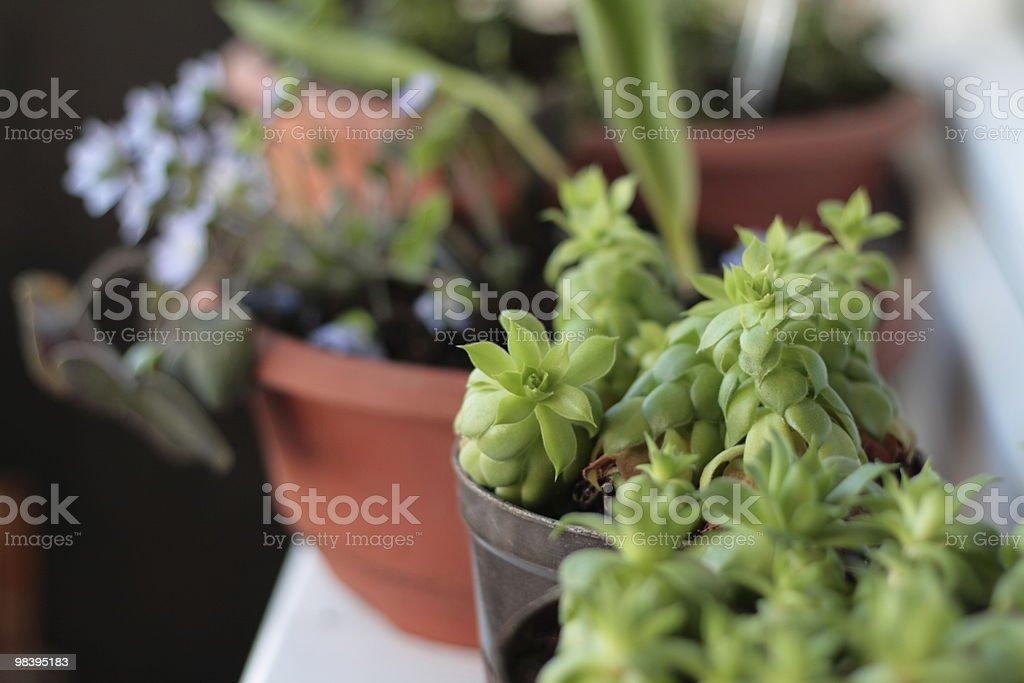 balcony plants royalty-free stock photo