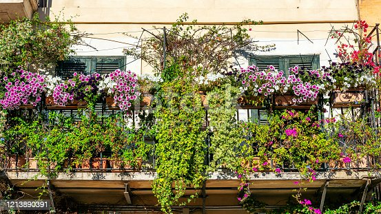 Flowery balcony with ivy, petunia and bougainvillea in Rome