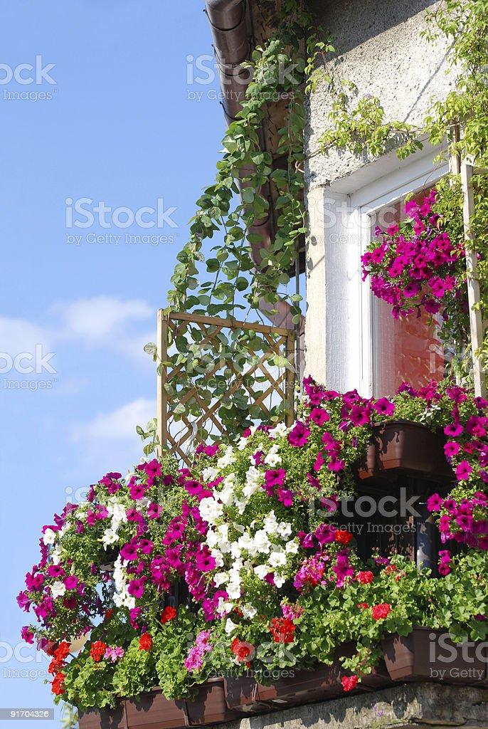 Balkon mit Blumen – Foto