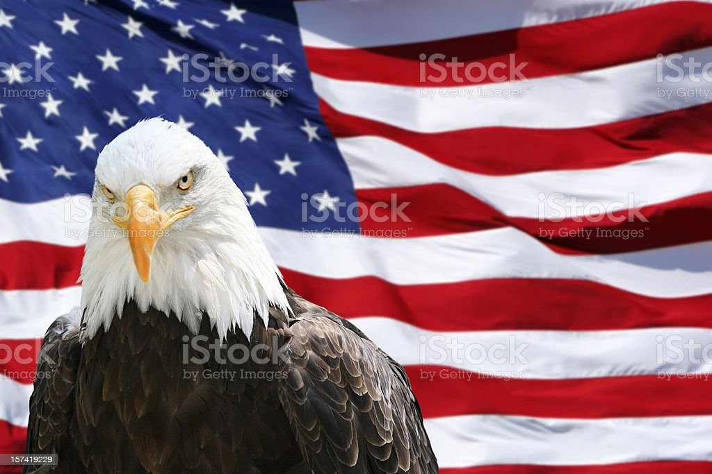 Bald Eagle - American Flag royalty-free stock photo
