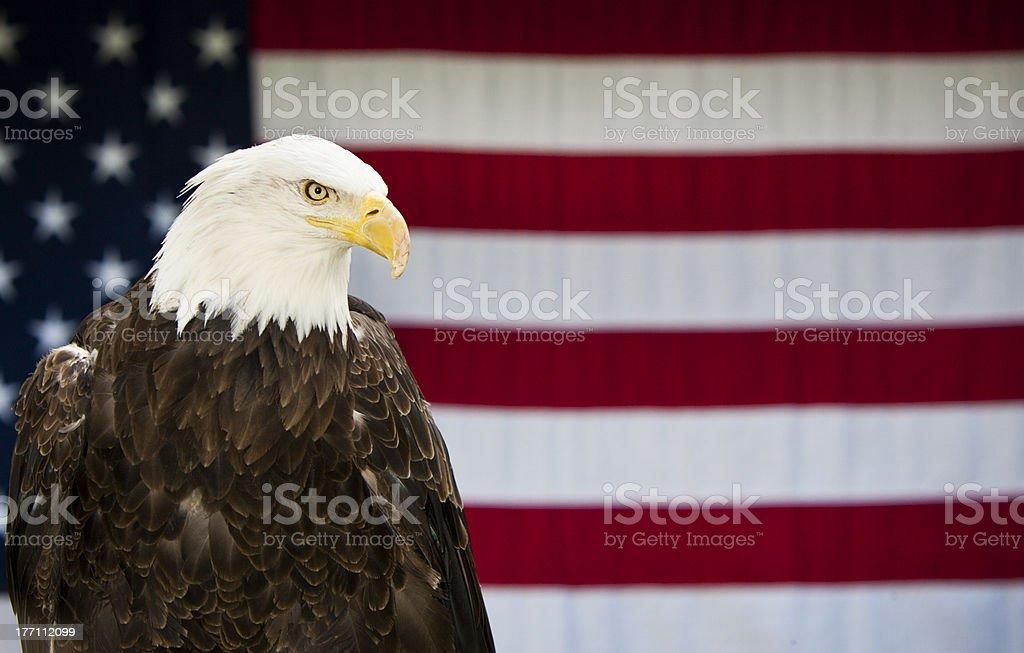 Bald Eagle American Flag stock photo