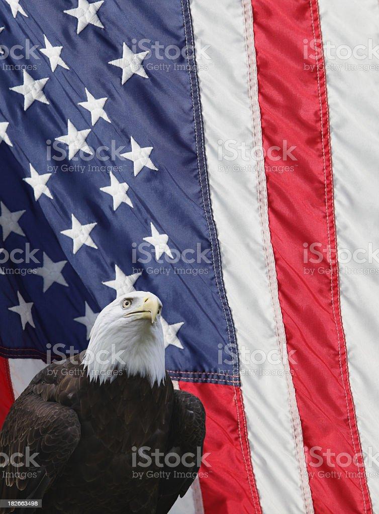 Bald Eagle American Flag Vertical Background stock photo