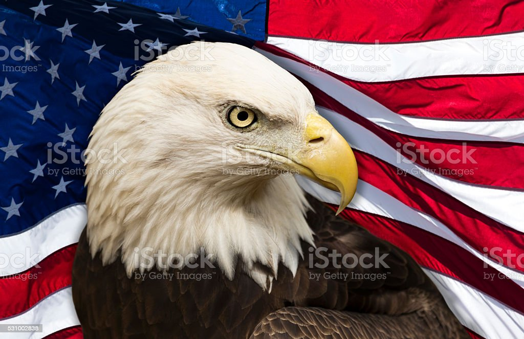 Bald Eagle and American Flag stock photo