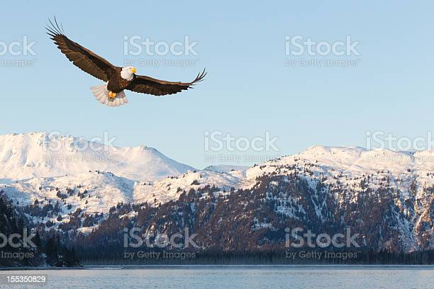Bald eagle and snow covered mountains picture id155350829?b=1&k=6&m=155350829&s=612x612&h=mjzhm8n9yhgj8wogq5ysv3lpd zlkxexlpcebtmoeqa=
