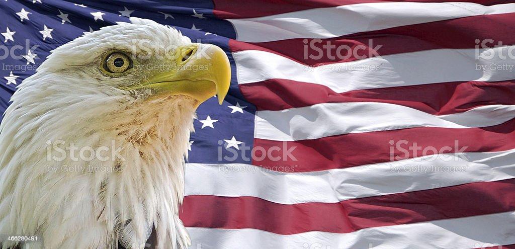 Bald eagle and US flag stock photo
