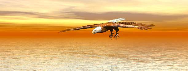 Bald eagle flying - 3D rendering stock photo