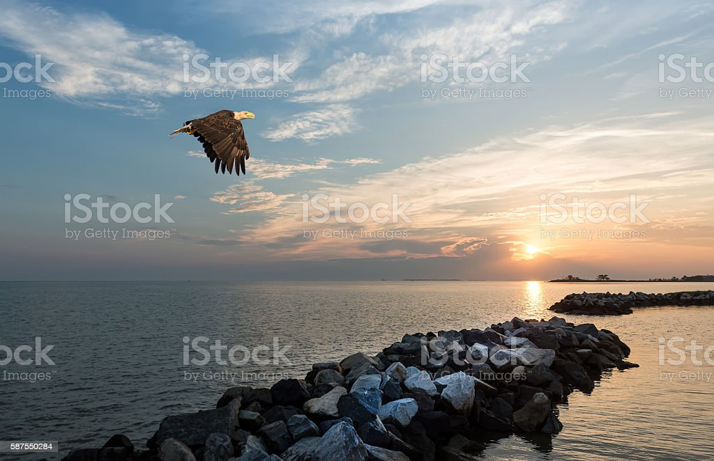 Bald Eagle flying over a jetty at sunset stock photo