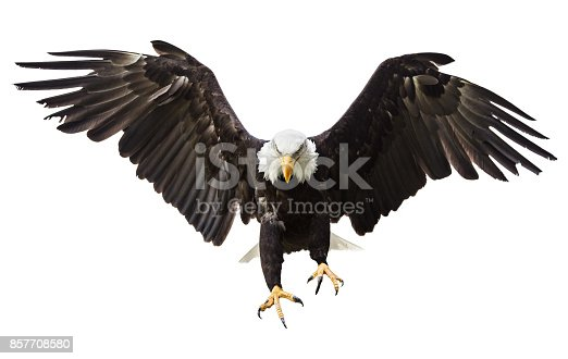 istock Bald Eagle flying with American flag 857708580