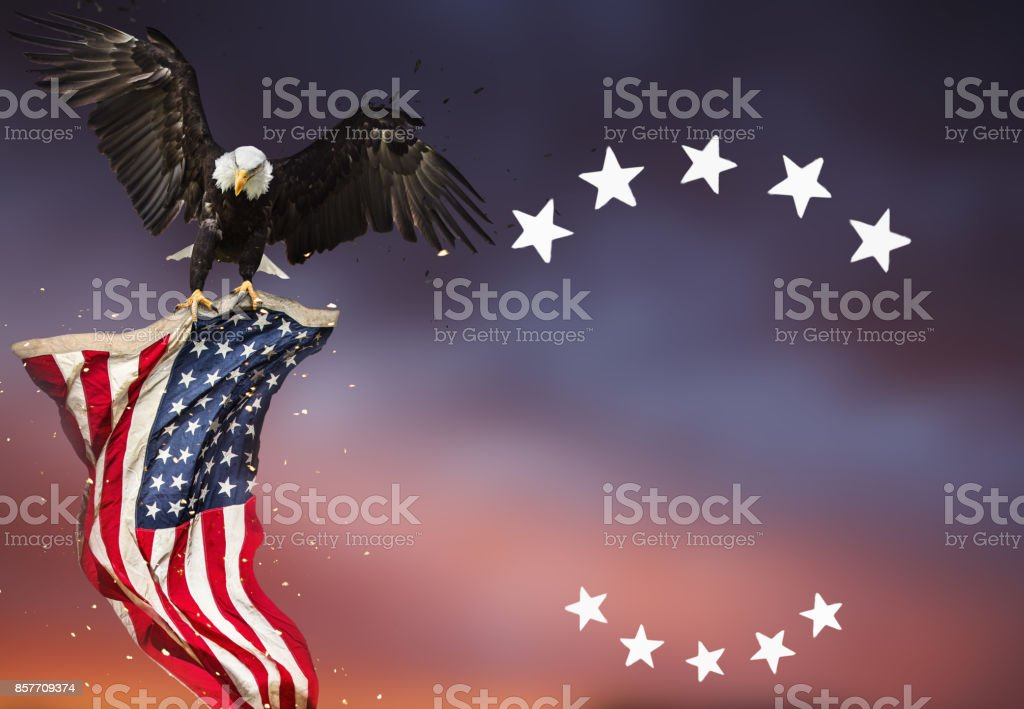 Bald Eagle flying with American flag stock photo