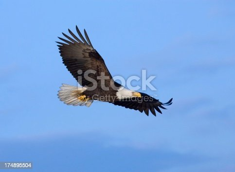 Eagle in the light with crystal blue sky background