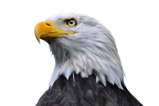 Bald Eagles outside of Ketchikan Alaska