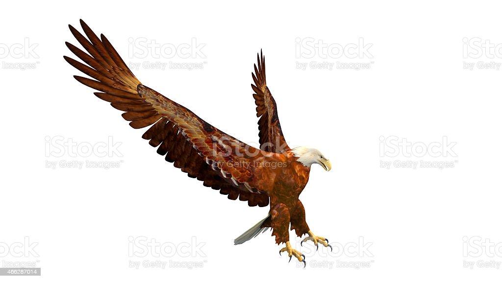 Bald Eagle Landing - Photo