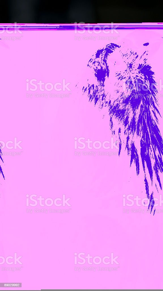 Bald Eagle (Haliaeetus leucocephalus) Looks Way Up royalty-free stock photo