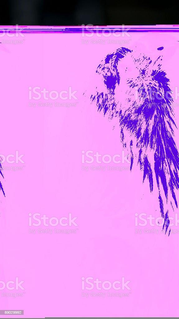 Bald Eagle (Haliaeetus leucocephalus) Looks Way Up 免版稅 stock photo