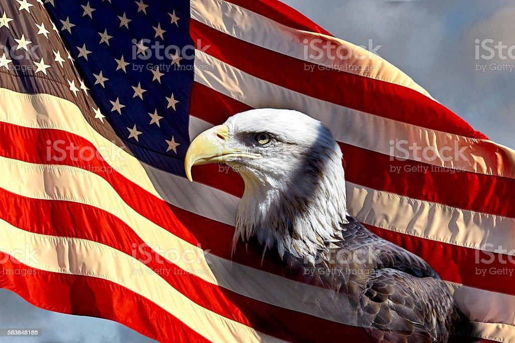 Bald Eagle on American Flag stock photo