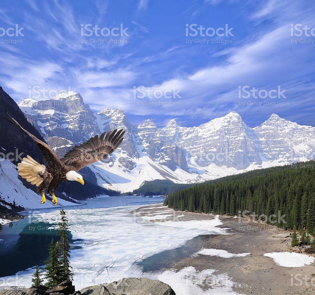 Bald eagle on Moraine lake background. stock photo