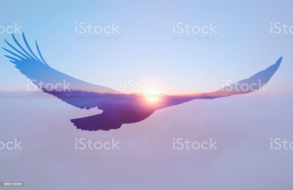 Bald eagle on sunset sky background. royalty-free stock photo