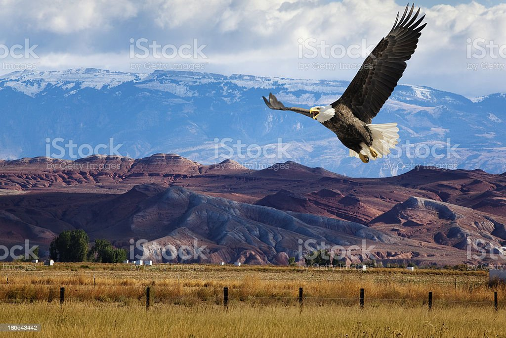 Bald Eagle Swoops Low Over Dramatic Western Landscape stock photo