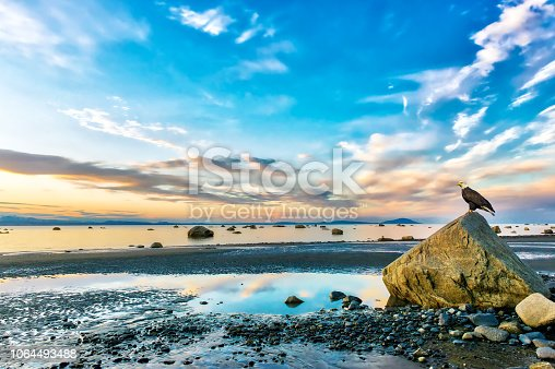 Bald Eagle perched on a rock on the Cook Inlet in Alaska watching a stunningly beautiful sunset