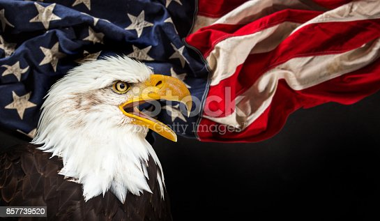 istock Bald Eagle with American flag 857739520