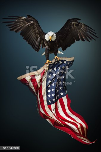 istock Bald Eagle with American flag 857739866