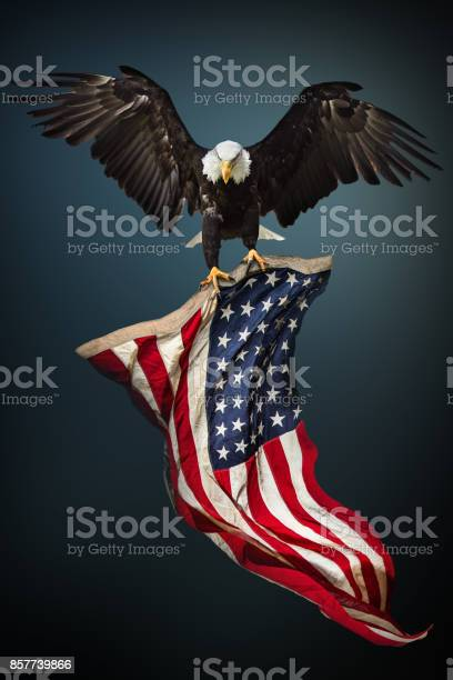 Bald eagle with american flag picture id857739866?b=1&k=6&m=857739866&s=612x612&h=j0drtgkmig7ntjs7 0waatszzskg2hhem2a1e42yvvw=