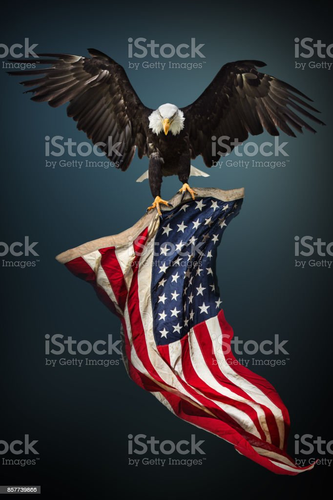 Bald Eagle with American flag - foto stock
