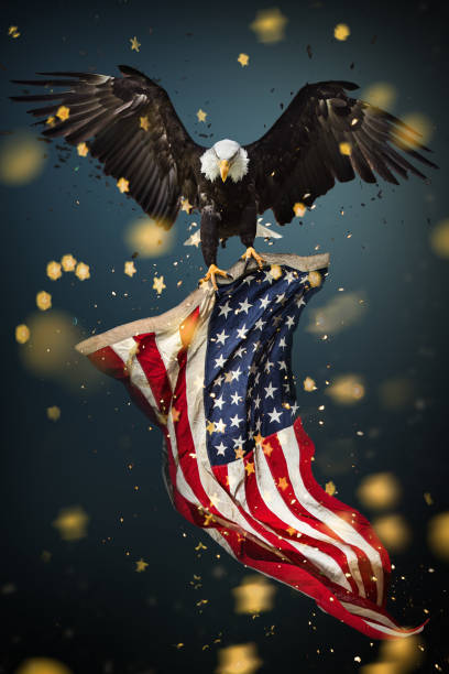 Bald Eagle with American flag North American Bald Eagle with American flag. day 4 stock pictures, royalty-free photos & images