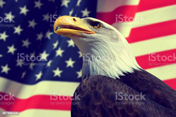Bald eagle with american flag picture id957685330?b=1&k=6&m=957685330&s=612x612&h=tdxoy8ukybcligvs4lxiry5107qzlcz19xwiexks9ge=
