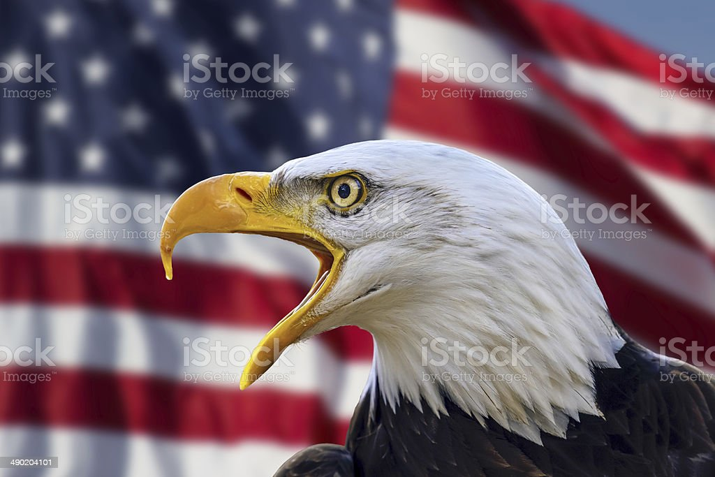 Bald Eagle with Flag United States of America stock photo