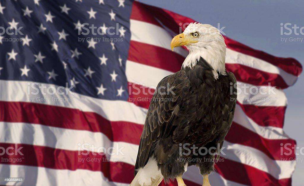 Bald Eagle with Flag United States of America foto