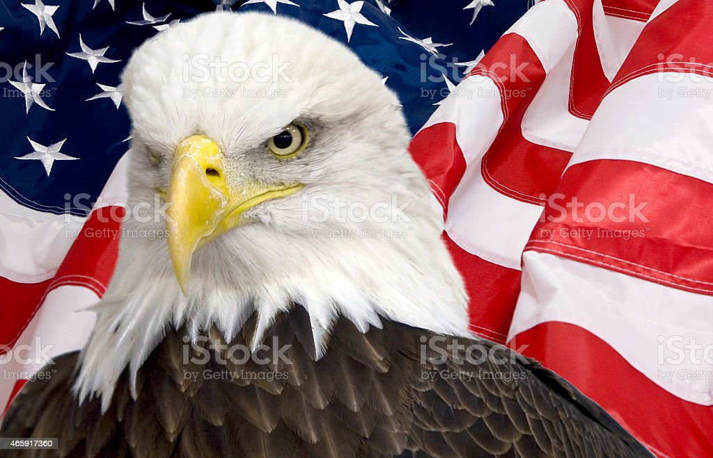 Bald eagle with the american flag out of focus stock photo