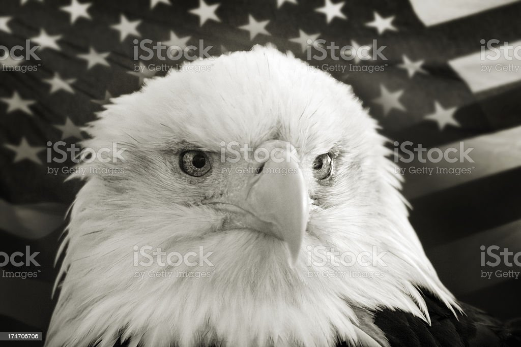 Bald Eagle with United States Flag in Black and White royalty-free stock photo