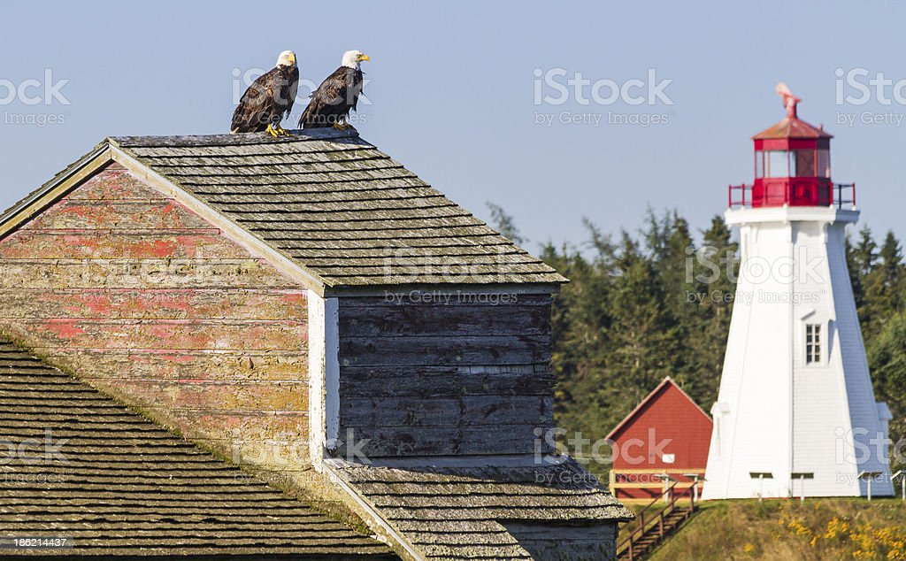 Bald Eagles and Mulholland Light stock photo