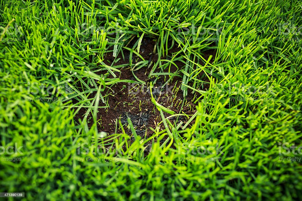 Bald spot in lawn with new soil and seed stock photo