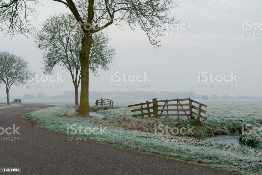 bald trees in a winter wonderland stock photo
