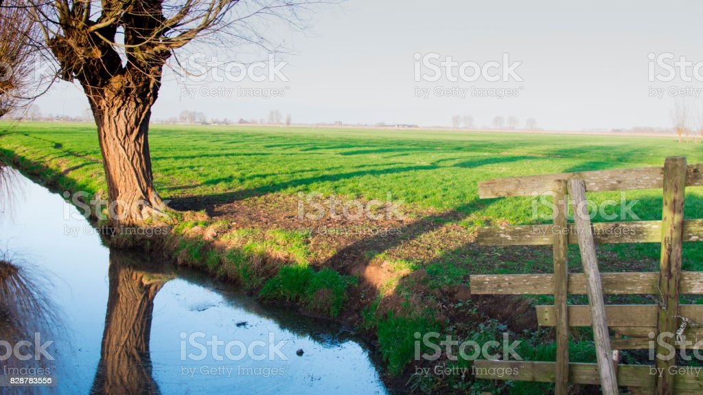 bald willow with fence and ditch in a Dutch landscape stock photo