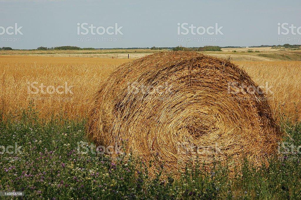 Bale in Saskatchewan royalty-free stock photo