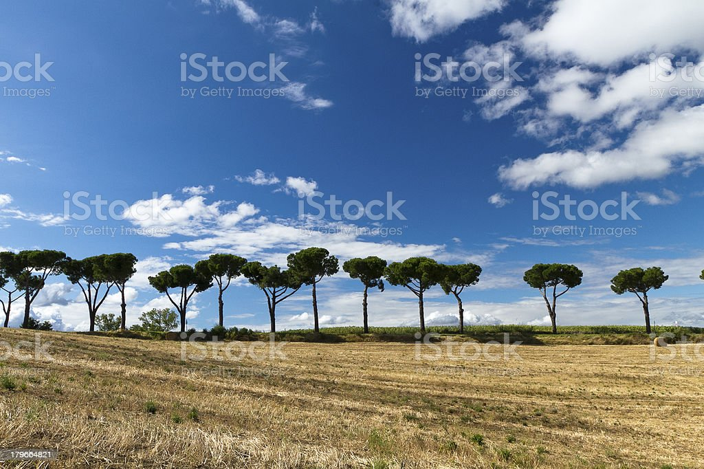 bale in the Tuscan countryside stock photo