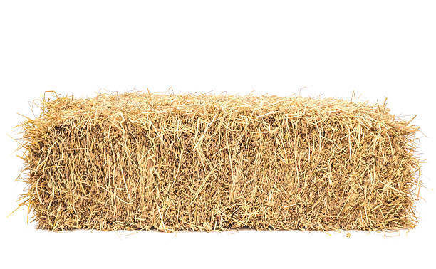 bale of hay isolated Bale of hay isolated on a white background as an agriculture farm and farming symbol of harvest time with dried grass straw as a bundled tied haystack. hay stock pictures, royalty-free photos & images