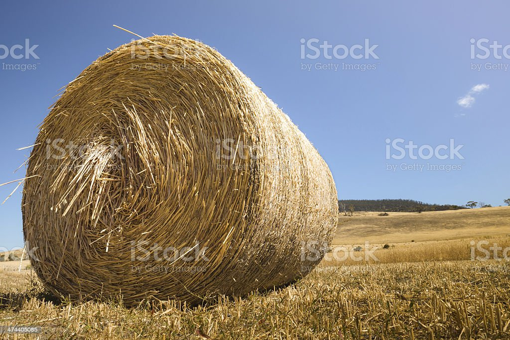 Bale of Oats in a sunny field royalty-free stock photo