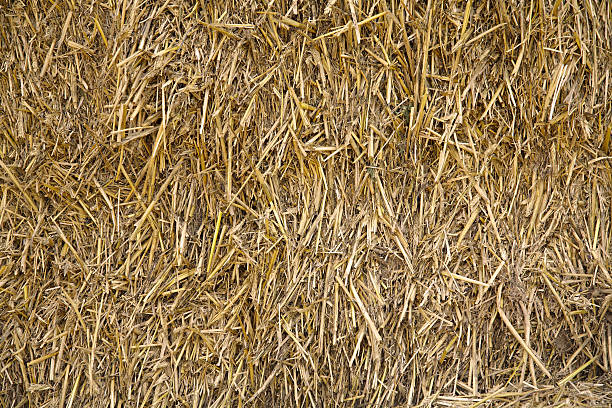 Bale Stroh - – Foto