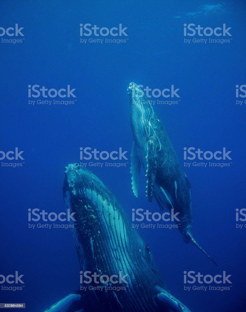 Baleine et petit stock photo