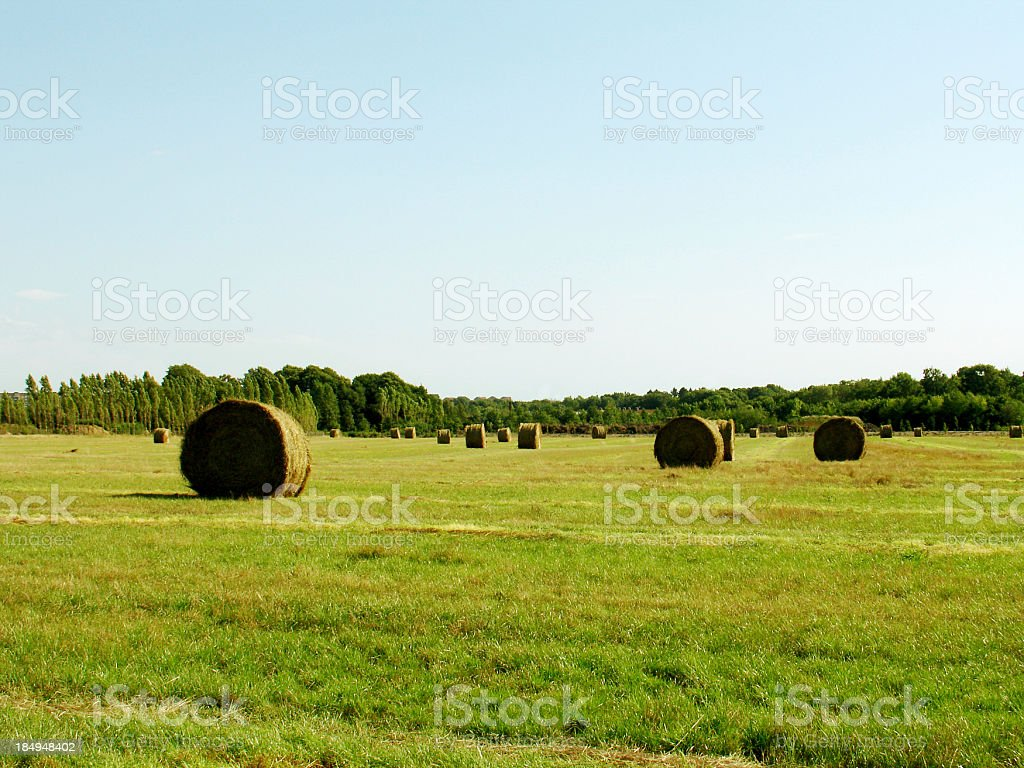 bales in a field royalty-free stock photo