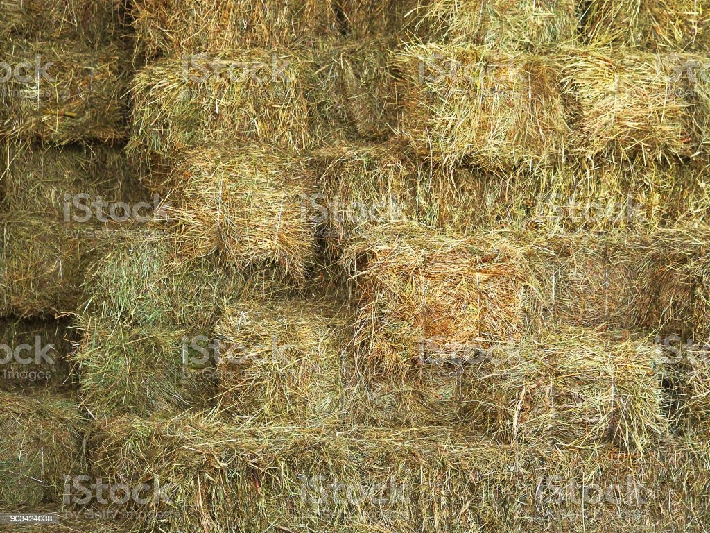 Bales of hay and cereal straw, agricultural background. Feed and litter for cows, horses, goats and sheep stock photo