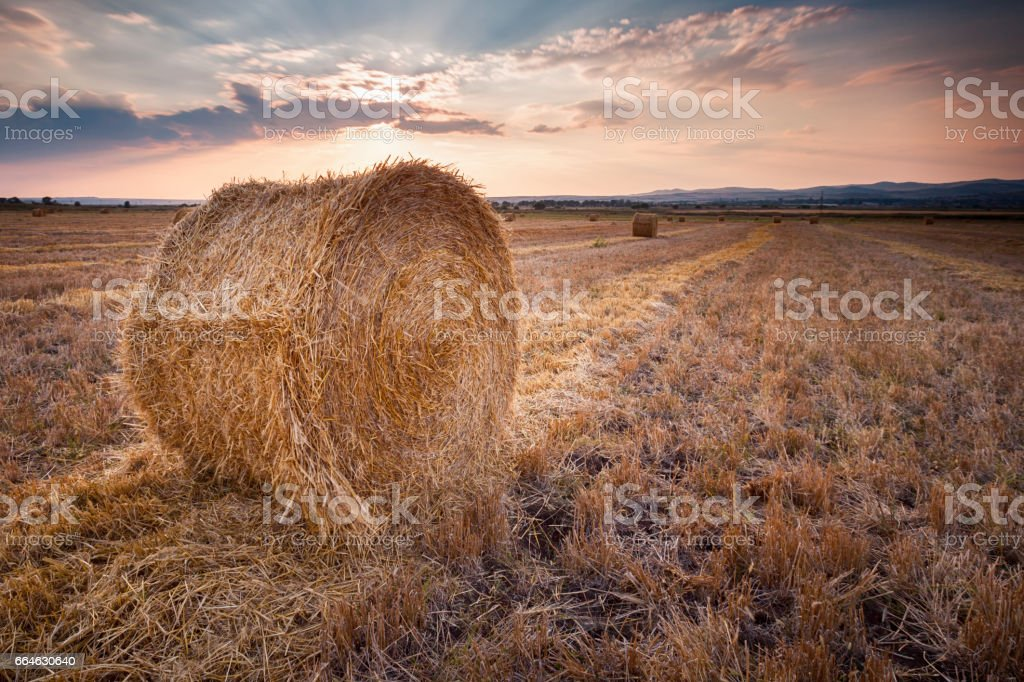 Bales of hay at sunset stock photo
