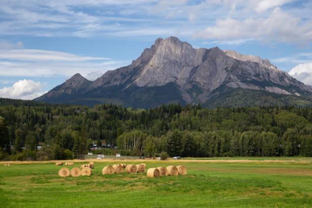 Bales of Hay in a Farm Field