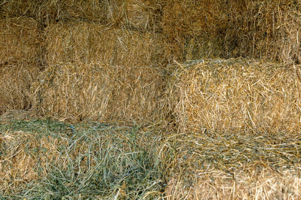 Bales Of Hay In Stable stock photo